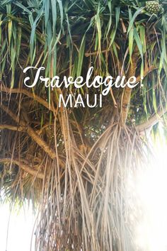 Travelogue: Maui, Hawaii (August 2013) - Hither and Thither