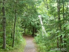 trail in WI - Pattison State Park