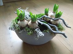 Voorjaar met hyacinten