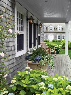 Lush patio with a gray shingled home exterior, teak deck and blue hydrangeas all. Lush patio with a gray shingled home exterior, teak deck and blue hydrangeas all around.
