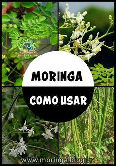Moringa: Para Que Serve, Benefícios e Como Usa-lá! Home Remedies, Natural Remedies, Health And Nutrition, Health Fitness, Growing Tree, Medicinal Plants, Garden Projects, Health Benefits, Flora