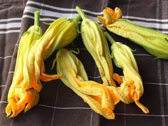 Food Wishes Video Recipes: Fried Stuffed Squash Blossoms – So Good, You'll Have Them Standing!