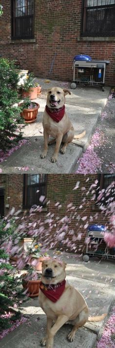This dog that was woefully underprepared for the severe weather: | 28 Animals Who Have Made A Huge Mistake