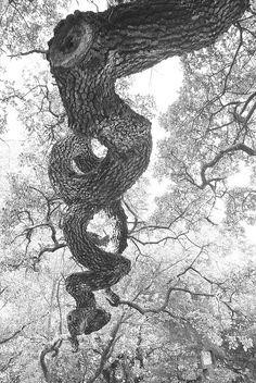 Spirit Tree - by Fe 108Aums