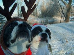 Puppies, getting festive.