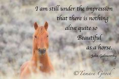 Horse quote, so true.