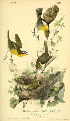 1842, v 4 - The birds of America :John James Audubon - Biodiversity Heritage Library  -