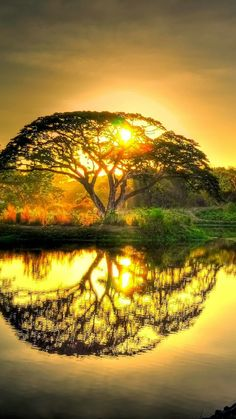 Sunset pond with tree reflection. Something like this with the BFG Dream Tree would make a beautiful watercolor tattoo                                                                                                                                                                                 More