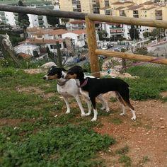 #Paseo con #Yuna #Lia #Max #Robin 03/18  🐶  * * #Disfrutar #enjoying #enjoy #disfrutamos #Disfrutandoeldía #DisfrutandoAndo #Mascotas #Mascottes #Pets #Mascot #Dogs #Shaggy #Furry #Hairy #Peludos #Ilovedog #Dog #Gatos #Cats #gato #Ilovecats #Perros #Dog #Ilovedog #Noalabandono #adoptanocompres #RincóndelaVictoria