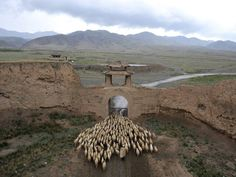A herder drives his sheep through a gate of the Yongtai ancient town in Jingtai county, China on June 20, 2015. (Reuters)