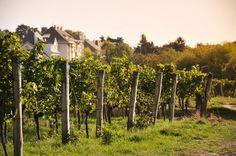 Wineyards Vienna! Müllers Heuriger - Bildergalerie Vienna, Vineyard, Destinations, Travel, Outdoor, Wine, Garten, Pictures, Voyage