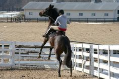Jez protesting having to hold her shoulder straight - Oy! http://myexracer.com/wp-content/uploads/2014/02/jez_rear.jpg #Ottb #Rearing