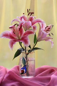 Ver fotos de Rosas  | Ver fotos de Tulipanes  | Ver fotos de Orquídeas  | Arreglos Florales Sabemos que a todas las mujeres les gustan las f...