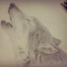 Wolf. Realismo com grafite.