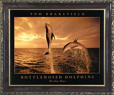 Bottlenosed Dolphins Freedom Dance At Ocean Sunset Wall D... https://www.amazon.com/dp/B01N9IOF1B/ref=cm_sw_r_pi_dp_x_cZgAzbDQXE2SP