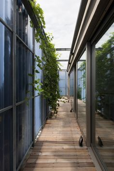 Gallery Of House In A House / Plural   4