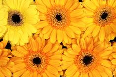 Orange Greberas Cross Stitch Pattern by Avalon Cross Stitch on Etsy Flower Images, Flower Pictures, Daisy Background, Daisy Wallpaper, Create Your Own Wallpaper, Mellow Yellow, Free Photos, Yellow Flowers, Cross Stitch Patterns
