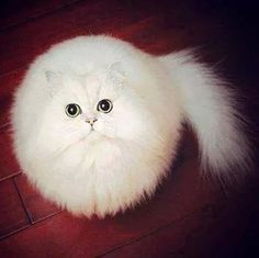 Ball of fur