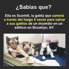 El amor de un madre Kitten Love, I Love Cats, Cute Cats, Like Animals, Animals And Pets, Cats And Kittens, Love Each Other, Stop Animal Cruelty, Cat Life