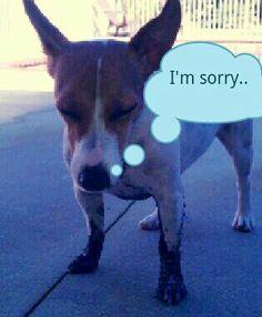 I'm sorry mommy