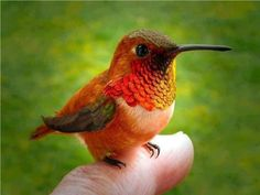 HUMMINGBIRD Photo:  This Photo was uploaded by survivor69. Find other HUMMINGBIRD pictures and photos or upload your own with Photobucket free image and ...
