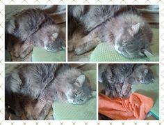 愛猫さくら姫|SHOOP+FACTORY(シュープ・ファクトリー)@オーナーブログ-159ページ目