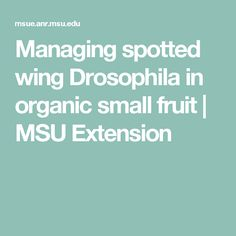 Managing spotted wing Drosophila in organic small fruit |     MSU Extension