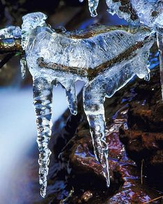 "Ice ""Life Within"" - by Cate Kerr"