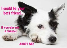 ADOPT A DOG RIGHT AWAY!!!