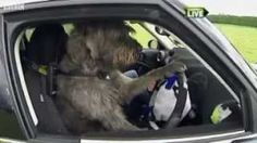 Driving school for dogs in New Zealand