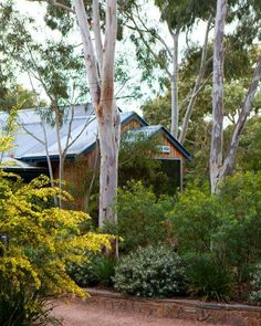 Author and naturalist Christine Lister knows a thing or two about native plants, growing more than 160 gum trees in her hideaway in the Melbourne suburb of Montmorency. Take a stroll through her garden for some local inspiration.