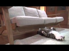 A Day in the Life of Maru and Hana - this is so wonderful!