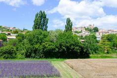 VALA16 - Village de Valensole - Alpes de Haute Provence 04