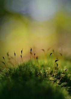 Mossy Morning  // By madd-matt at fliclr