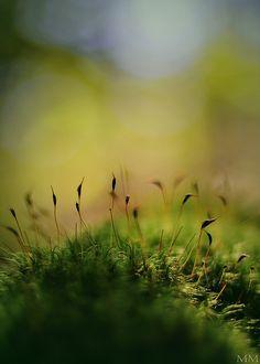Mossy Morning  // By madd-matt at fliclr