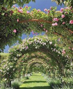 Balcony Garden, Garden Planters, Balcony Design, Garden Design, Cube World, Ancient Chinese Architecture, Outdoor Umbrella, Chinese Garden, Growing Herbs