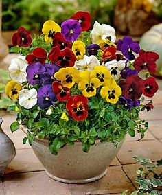 Pansies...such happy flowers:))                                                                                                                                                                                 More