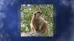 Visit: http://orangevale-pestcontrol.com/ Animal & Rodent Control Orangevale CA 95662 916-226-4836 Serving Sacramento County California Since 2000.