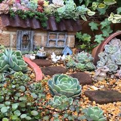 32 Nice Succulents Garden Ideas For Outdoor Decor - Succulents are perfect plants for dry gardens and are easy to root and grow. Once you learn how easy it is to propagate succulent plants. Succulent Garden Landscape, Cactus Garden Landscaping, Plants, Succulents, Cactus Garden, Rock Garden Plants, Fairy Garden, French Country Garden, Rock Garden Landscaping