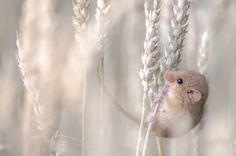 NHM Wildlife Photographer of the Year 2013