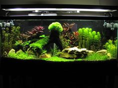 Well organized planted tank