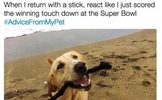 A hashtag we can get behind. Dog Humor, Crazy Dog Lady, Cute Dogs And Puppies, Funny Tweets, Adorable Animals, Funny Dogs