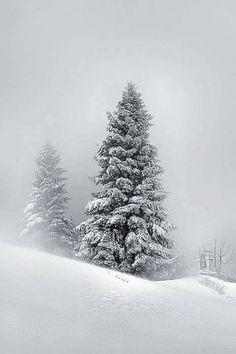 simply beautiful Winter Magic, Winter Snow, Winter White, Winter Trees, Snowy Trees, Tree Photography, Winter Photography, Landscape Photography, Winter Schnee