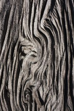 дерева Tree Bark Textures with intricate patterns - organic texture source;s artwork:Tree Bark Textures with intricate patterns - organic texture source;s artwork: Art Texture, Wood Texture, Texture Design, Natural Texture, Natural Wood, Texture Painting, Texture Tile, Line Texture, Texture Images