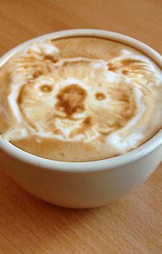 .Koala Latte #coffee #art