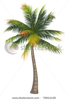 palm tree clip art | Picture Of A Tropical Palm Tree In A Vector Clip Art Illustration