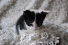 Meet Tira & Misu #tiramisu my new roomies🐱🐱.   • • #kitten #lovekittens #kittenphotography #kitties #kittens #animalphotography #cat #cats #ilovemycat #mycat #mycats #cutekitten #cutecat #petsofinstagram #pet #petlove #ilovemypet #petphotography #catname #cute #love