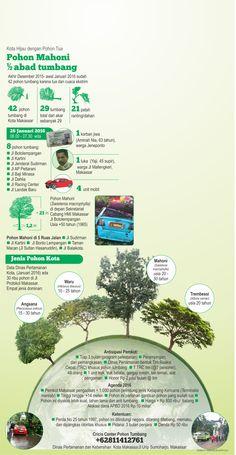 Pohon tumbang di Makassar tewaskan warga. Bagaimana potensi bahaya selanjutnya?