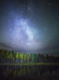 Forest. Autumn 2014, Southern Lapland. www.tiinatormanen.com