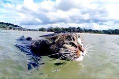 cats on the beach - Google zoeken
